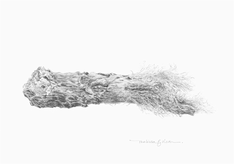 washed ashore (driftwood) drawing